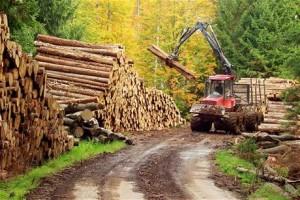 Lesní technika v lese