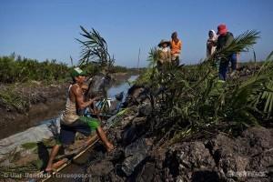zpracování palmového oleje pracovníky v Kalimanu